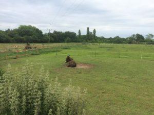 Brown donkey at Millennium Farm Trust