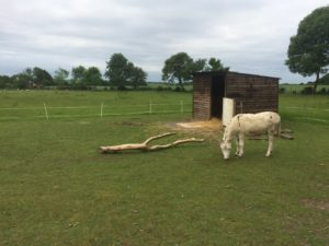 Donkey at Millennium Farm Trust